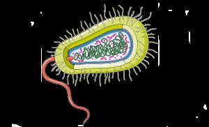 Streptococul beta hemolitic de grup A - esecul tratamentului