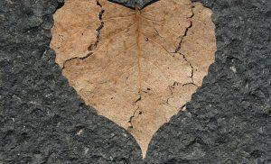 Jurnal de inima jumulita